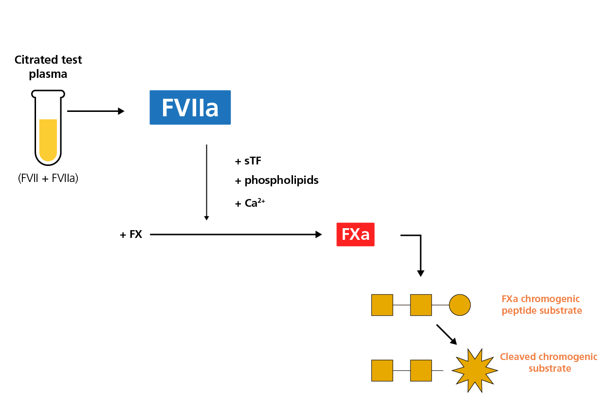Schematic diagram of the chromogenic FVIIa assay