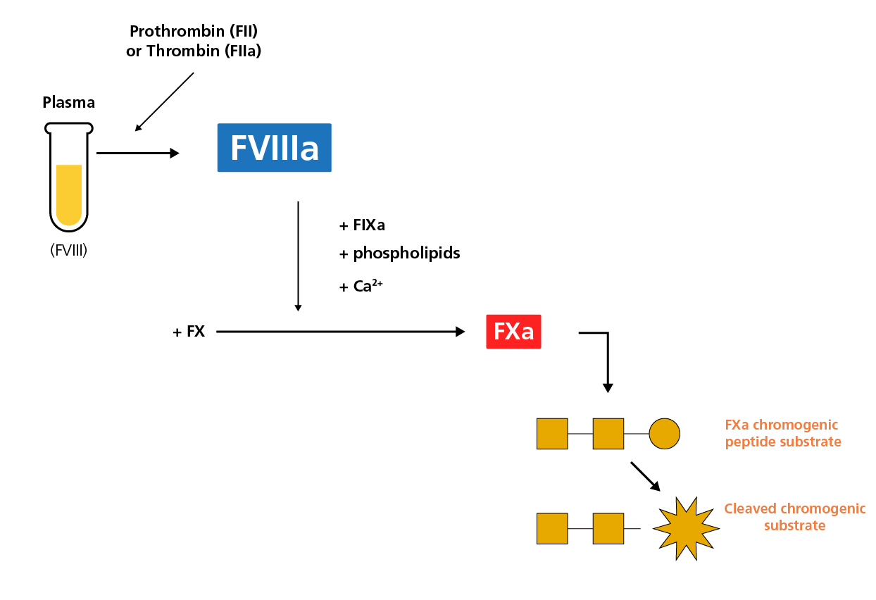 chromogenic FVIII assay